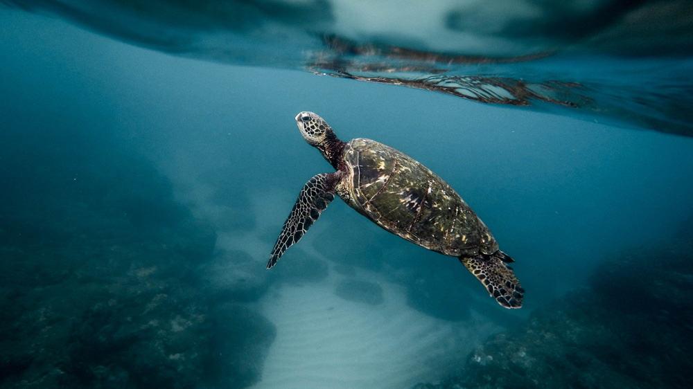 diving in kalpitiya sri lanka
