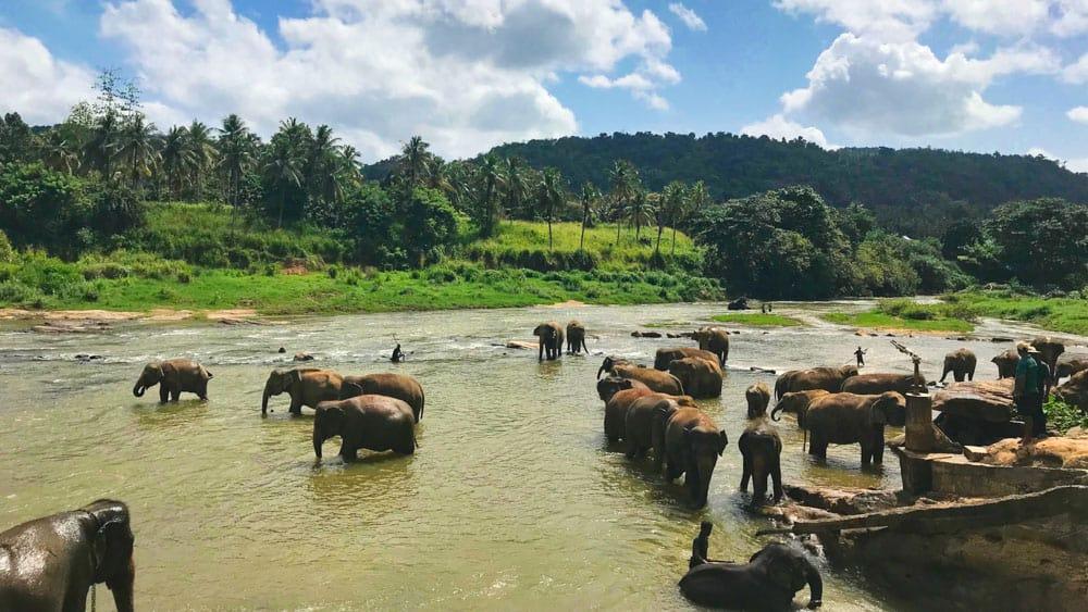 wildlife safari sri lanka