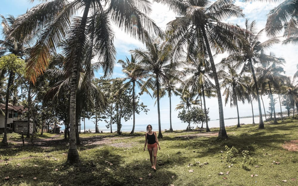 Wandering through the palm trees in Medewi, Bali