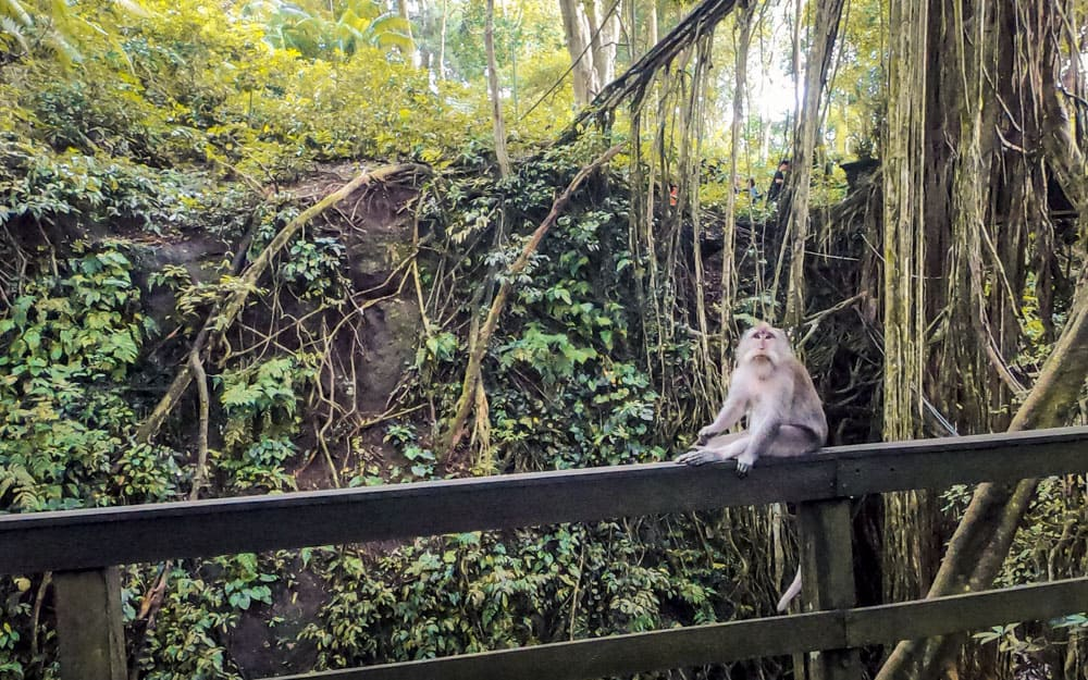 Monkey sitting on a wall in the sacred monkey forest in Ubud, Bali