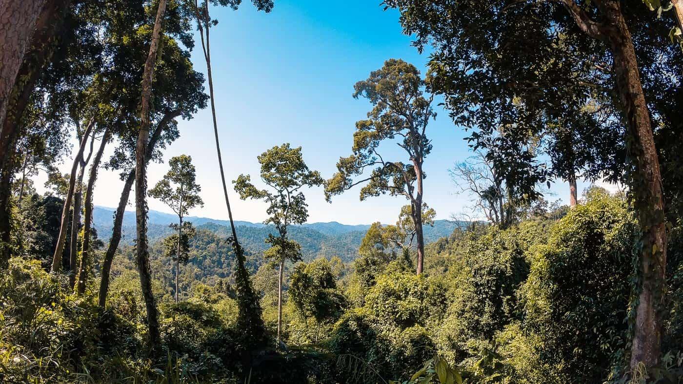 kuiburi selva tailandesa