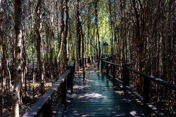 Schaduwrijke promenade omringd door mangroves in het Pranburi Forest Park, Thailand
