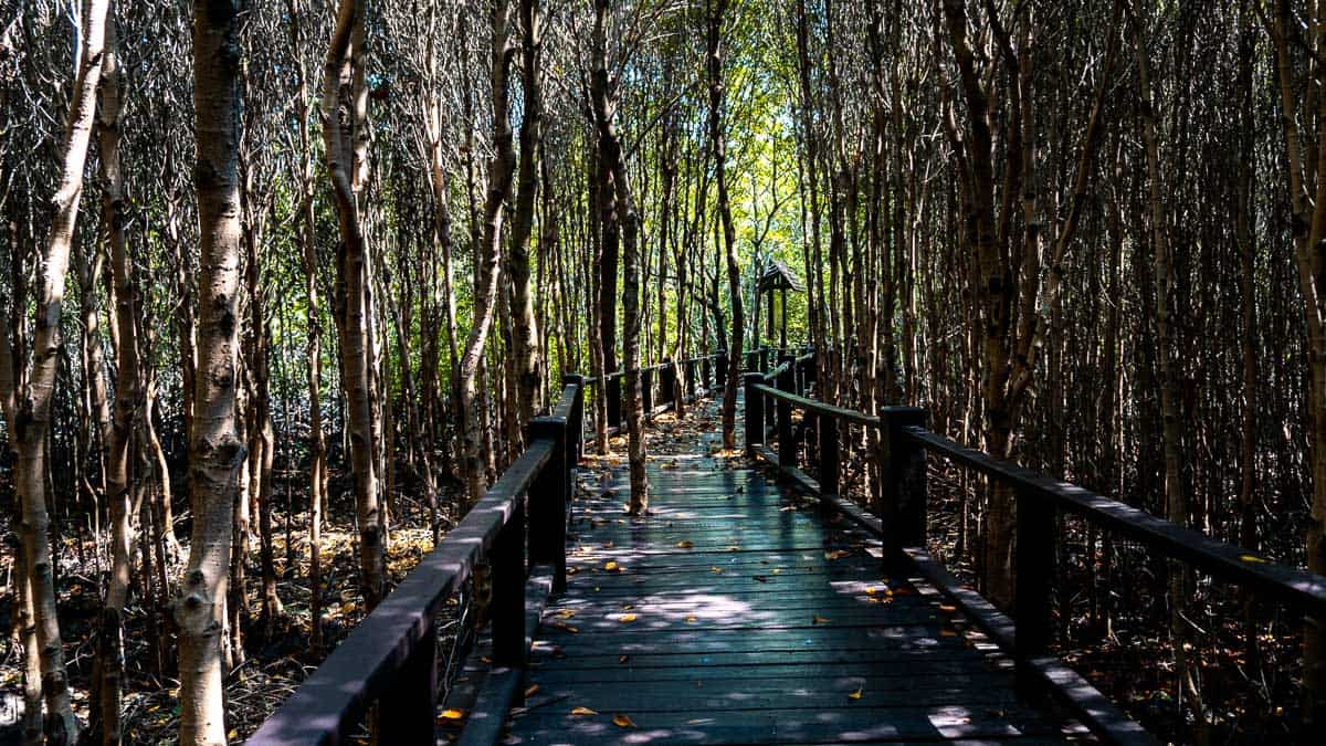 Complete Guide to Pranburi Forest Park & Beach Nature Trail (2019)