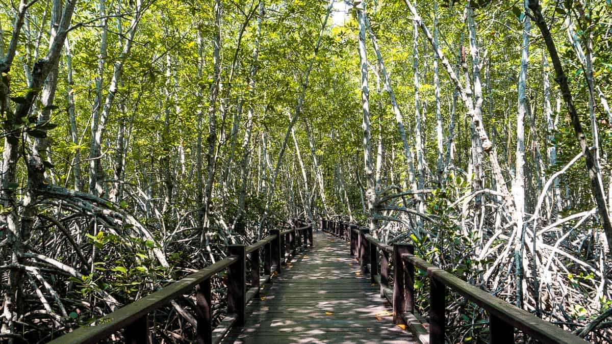 under the mangrove canopy in Pranburi forest park