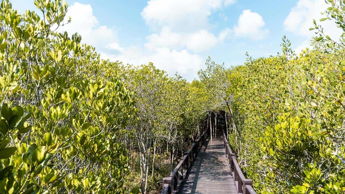 mangrove lined boardwalk in pranburi forest park
