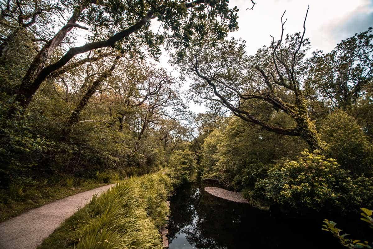 Cena calma de um rio que mal corre ao longo de uma passarela no bosque glengarriff, a cortiça do oeste.