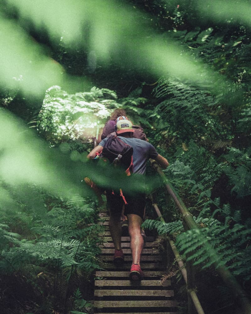 a couple hiking through the fern covered forest. the shot is slightly obstructed by ferns brushing against the camera lens. we can just make out the couple climbing a set of staircases through the woods.