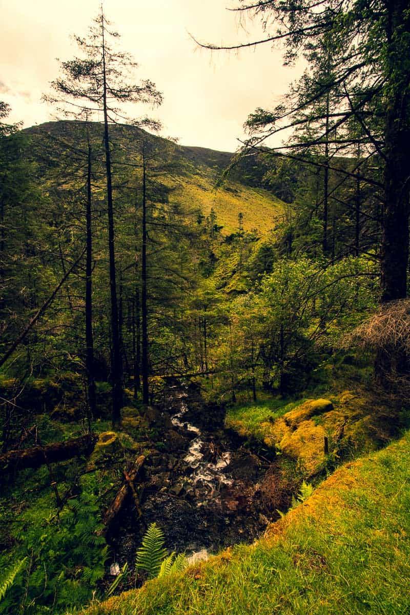 vertikales bild des gougane barra forest park. ein sprudelnder wasserfall halbiert das foto, links und rechts davon stehen hohe, schlanke kiefern. im hintergrund sind gerade noch die sheehy-berge zu erkennen.