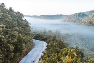 misty landscape on siargao island, with a winding road bisecting a thick grove of palm trees