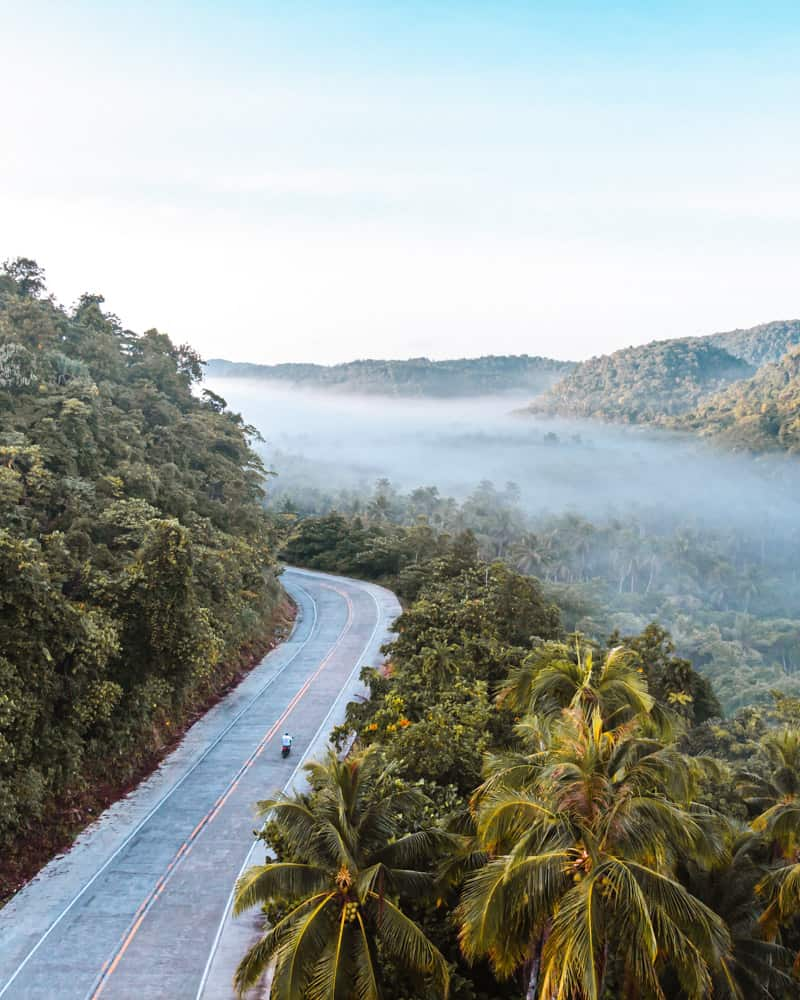 paesaggio nebbioso sull'isola di siargao, con una strada tortuosa che attraversa un fitto boschetto di palme