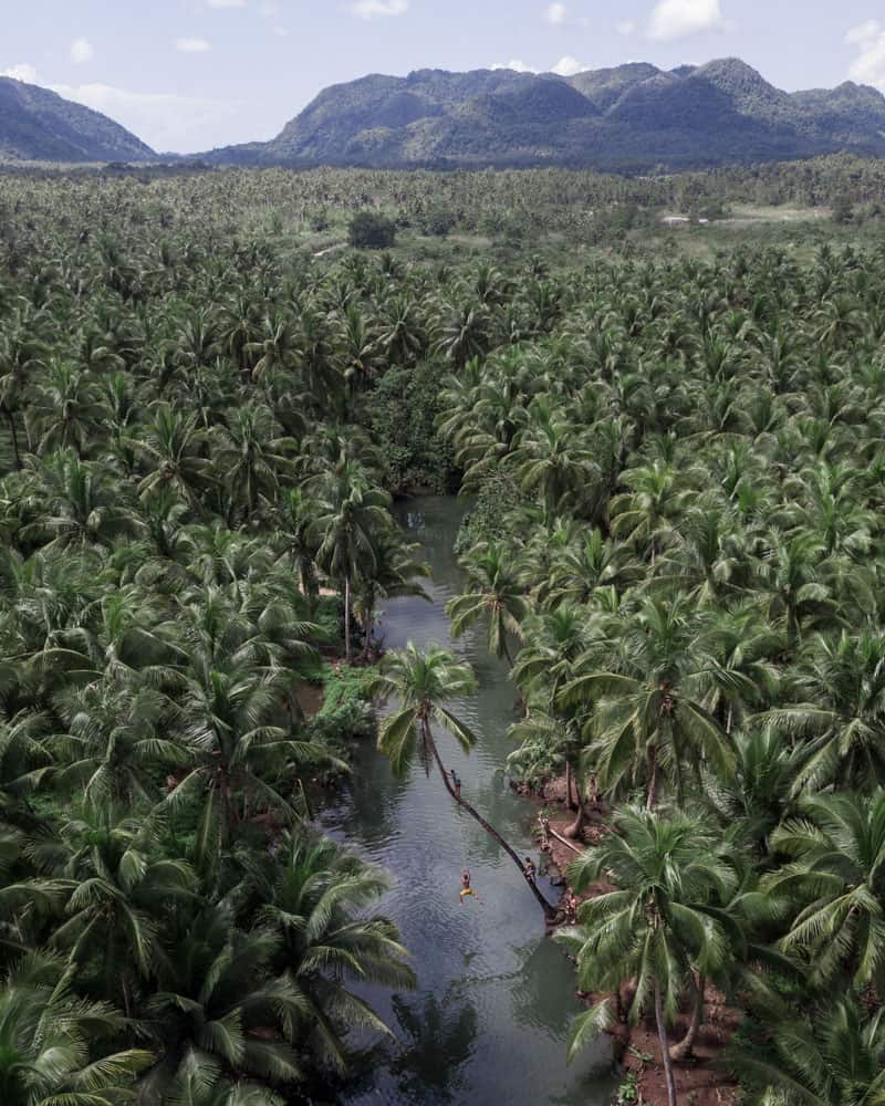 ein spiegelglatter fluss durchschneidet einen dichten palmenhain auf der insel siargao, philippinen, mit einer nebligen berglandschaft im hintergrund.