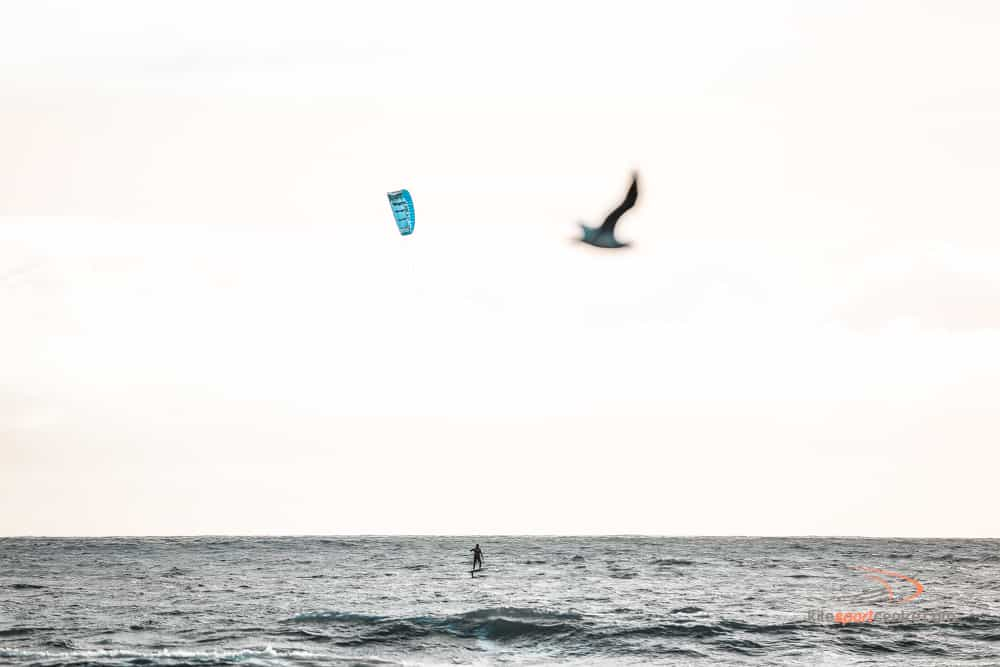 a soft pink-ish sky hangs over the kitesurfing spot, where a single kitesurfer is riding a foil board out on the water. a seagull is flying past the shot and appear out of focus in the foreground.